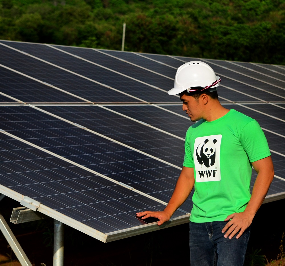 "<h1>Rewnewables Best Way to Power PH</h1> <p>For years, WWF-Philippines has advocated for </p> <p style=""text-align: right;""><a href=""https://wwf.org.ph/what-we-do/climate/renewables/renewables-to-power-ph-dev/"">Read More ></a></p>"