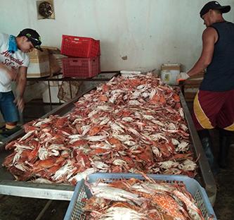 WWF-Philippines   Blue Swimming Crab Fisheries Improvement